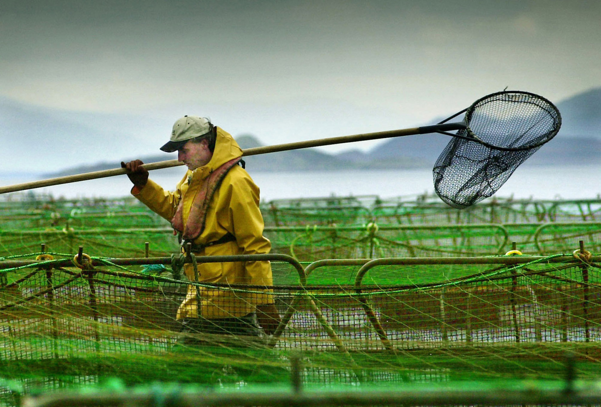 A worker at a salmon farm on Loch Linnhe near Fort William