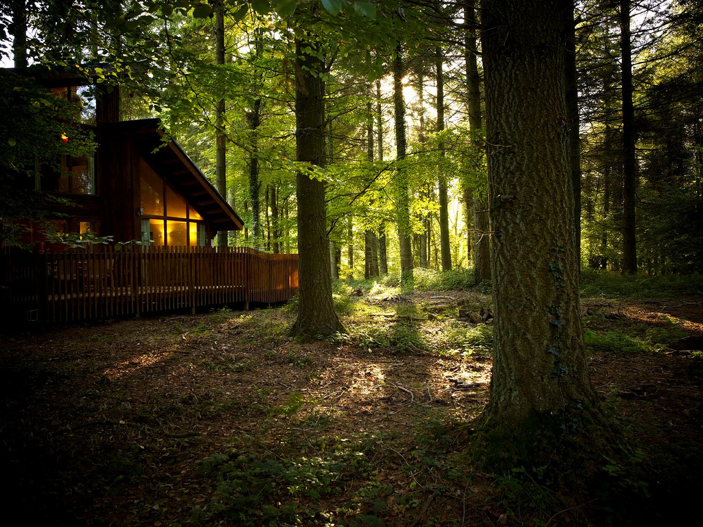 A Forest Holidays cabin.